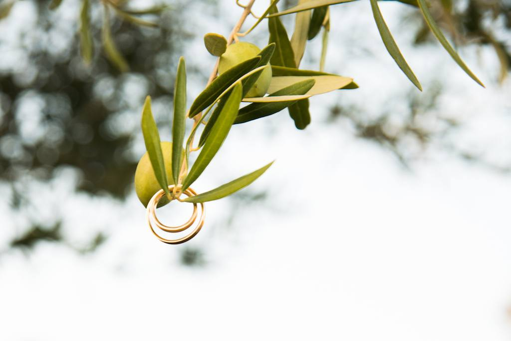 wedding-rings-hanging-from-olive-branches