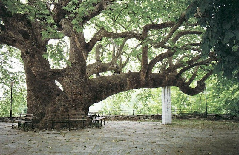 wedding-ceremony-under-the -tree